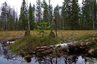 rezerwat torfowisko1