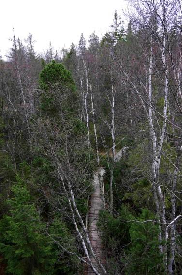 rezerwat torfowisko12