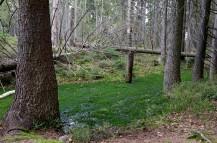 rezerwat torfowisko2