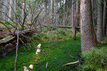 rezerwat torfowisko3jpg