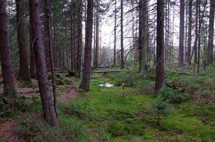 rezerwat torfowisko4