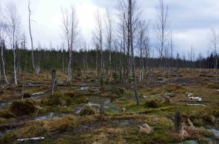 rezerwat torfowisko7